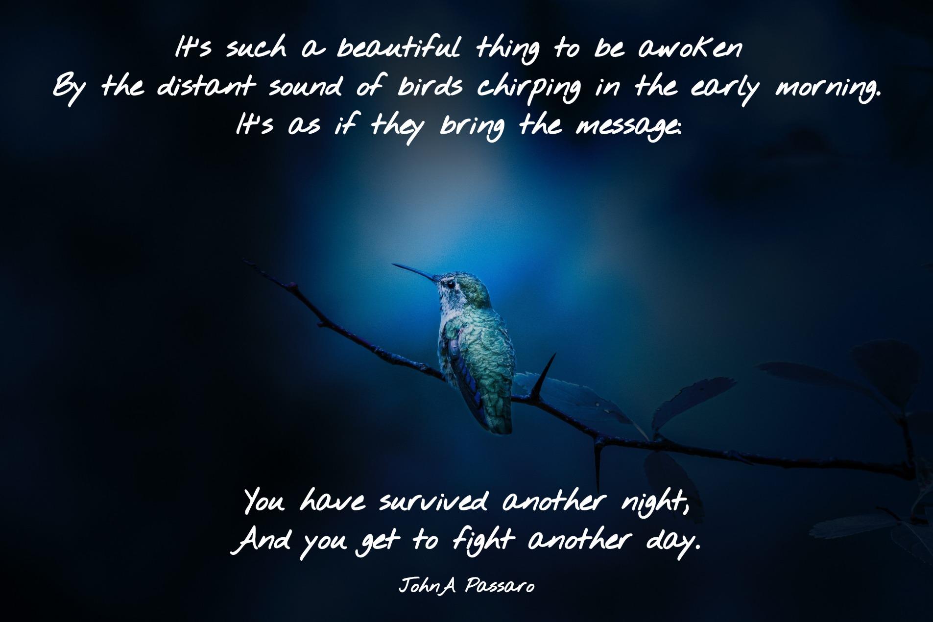 Birdatnight-